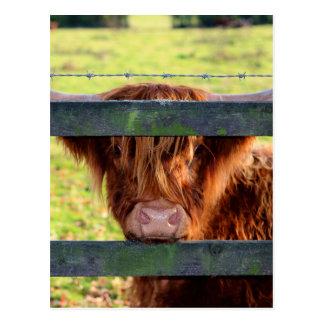 高地牛 ポストカード