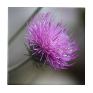 高山のアザミ(Carduusのdefloratus) タイル