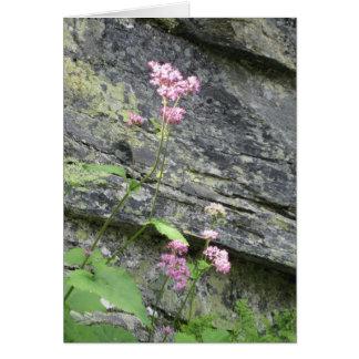 高山の花 カード