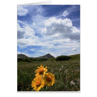 高山の野生の花、ロッキー山脈 カード