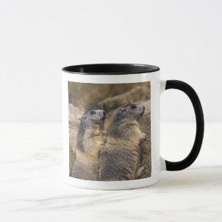 高山のMarmot、Marmotaのmarmota、大人、Saas マグカップ