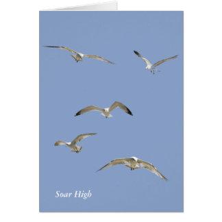 高空飛行のカモメの群 カード