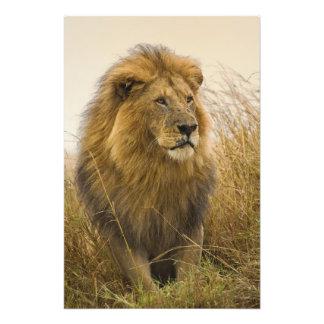 高齢者の黒のmanedライオン、マサイ族のマラのゲーム フォトプリント