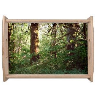 魅了された森林トレイ トレー