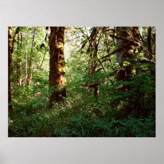 魅了された森林ポスタープリント ポスター