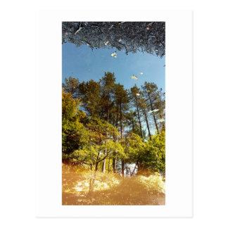 魔法の森林 ポストカード