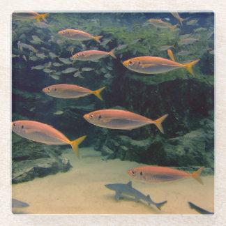魚の群れ ガラスコースター