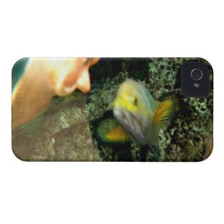 魚の顔の格言 Case-Mate iPhone 4 ケース