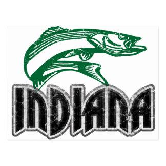 魚インディアナ ポストカード