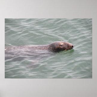 魚市場ポスターのかわいいシールの水泳 ポスター