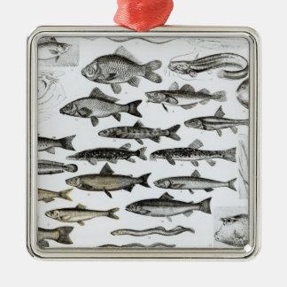 魚類学、Osseous魚、Marisipobranchs メタルオーナメント