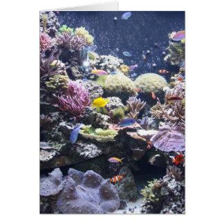 魚飼育用の水槽 カード