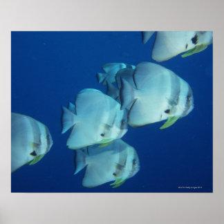 魚5の学校 ポスター