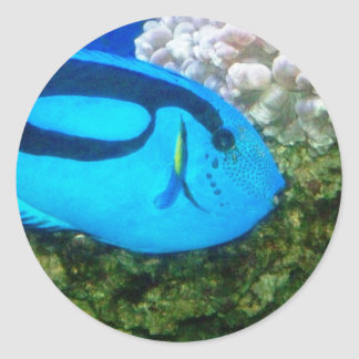 魚6 ラウンドシール