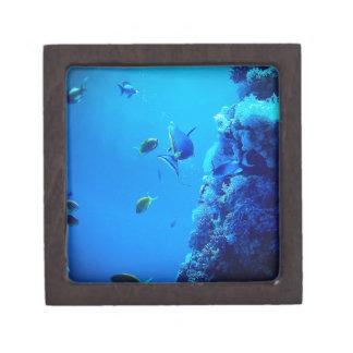 魚 ギフトボックス