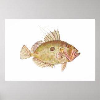 魚-ジョン小舟-ゼウスフェーバー ポスター