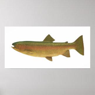 魚-ニジマス- Salmoのgairdnerii ポスター