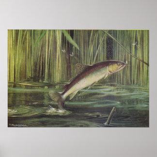 魚-ブラウン・トラウト- Salmoのtrutta ポスター