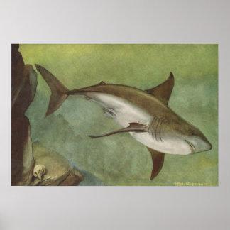 魚-ホオジロザメ- Carcharodonのcarcharias ポスター