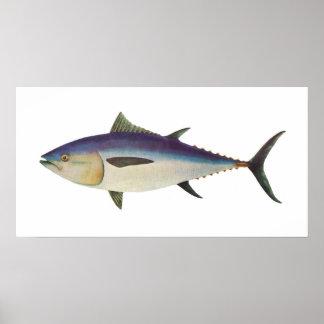 魚-南ほんまぐろ- Thunnusのmaccoyii ポスター
