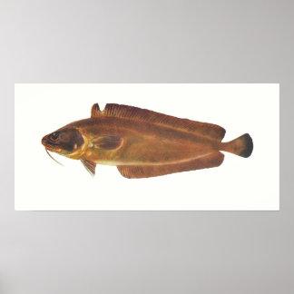 魚-陵- Lotellaのcallarias ポスター