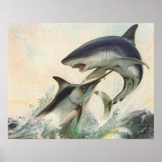 魚-黒いマカジキ及びアオザメ鮫 ポスター