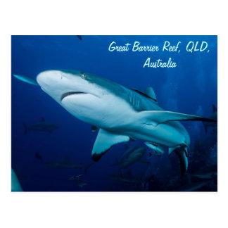 鮫のグレート・バリア・リーフの珊瑚海 ポストカード