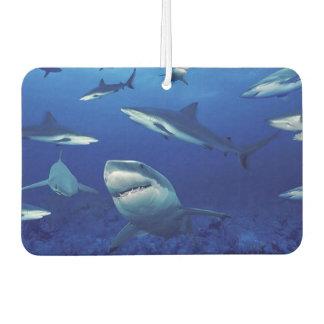 鮫の空気Freshner カーエアーフレッシュナー