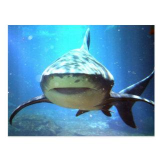 鮫の郵便はがき ポストカード