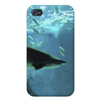 鮫のiPhoneの場合 iPhone 4 ケース