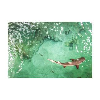 鮫-キャンバスのプリント--を見て下さい キャンバスプリント