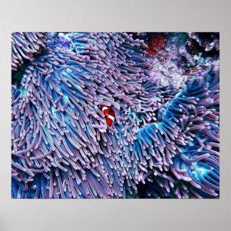 鮮やかで白熱[赤熱]光を放つな熱帯海の珊瑚 ポスター