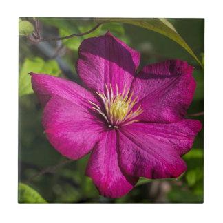 鮮やかなマゼンタのピンクのクレマチスの花 タイル
