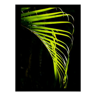 鮮やかなライムグリーンのシュロの葉 ポスター