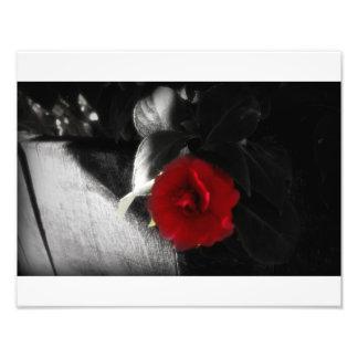 鮮やかな開花 フォトプリント