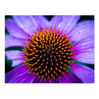 鮮やかなConeflower ポストカード