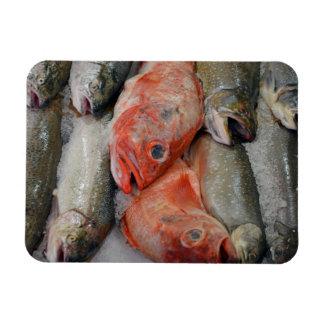 鮮魚のプリントの磁石 マグネット