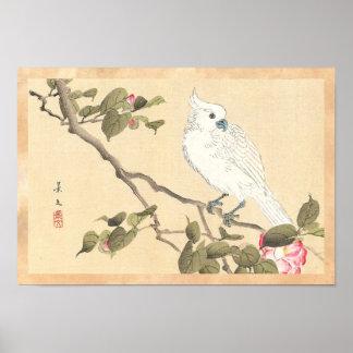 鳥および花のアルバム、オウムおよびツバキ ポスター