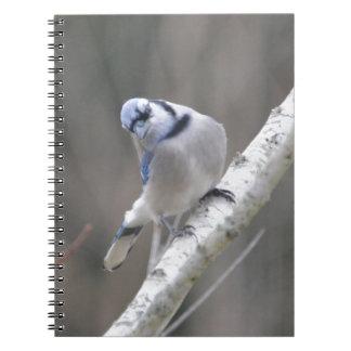 鳥のアオカケスの自然 ノートブック