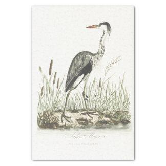 鳥のイラストレーションの公有地の鷲 薄葉紙