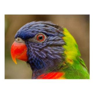 鳥のオウム動物の郵便はがき ポストカード