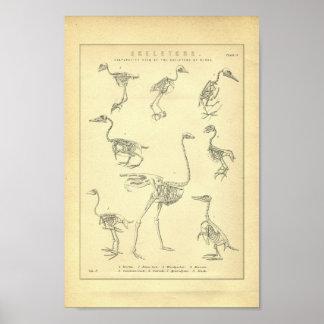 鳥のプリントのヴィンテージの骨組 ポスター
