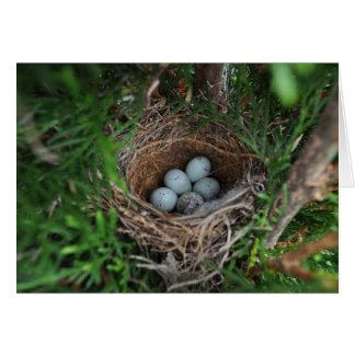 鳥の巣 カード