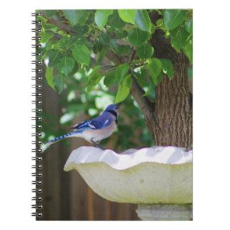 鳥の浴室のアオカケス ノートブック