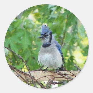 鳥の目日 ラウンドシール