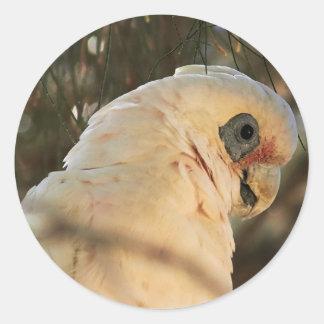 鳥の目 ラウンドシール