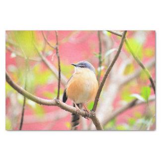 鳥の美しくカラフルな自然の景色 薄葉紙