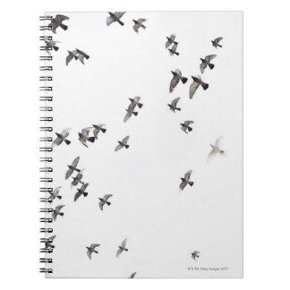 鳥の群は空で飛んでいます ノートブック