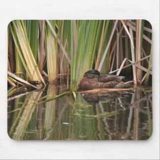 鳥の野性生物動物の沼地の写真撮影 マウスパッド
