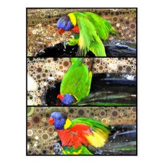鳥のBathの郵便はがき ポストカード